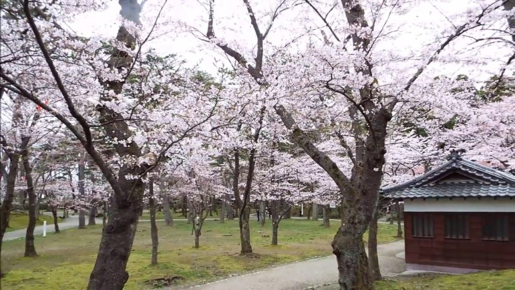 2019秋田県の桜はいつから!?おすすめ花見名所の駐車場情報!